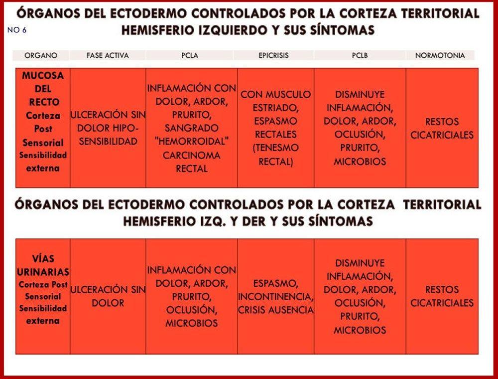 ORGANOS Y SUS SINTOMAS 6 | MEDICINA BIOLOGICA | Pinterest | Tabla ...
