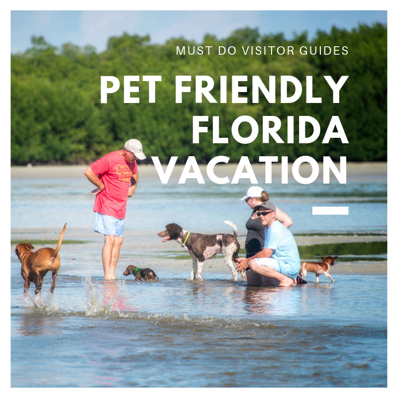 Taking a PetFriendly Vacation to Florida Florida