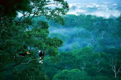 Rain Forest Kalimantan Di 2020 Kalimantan Pemandangan Hutan