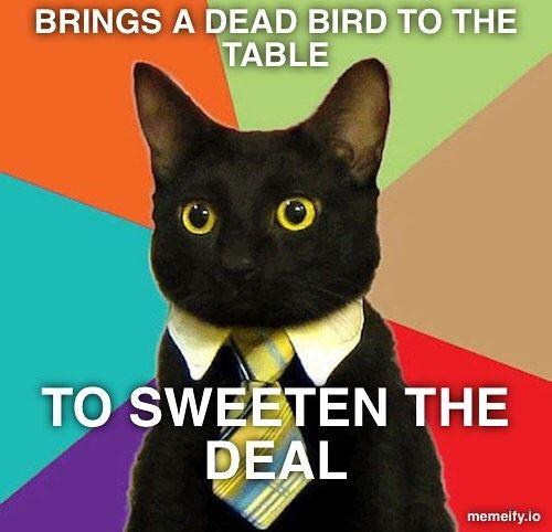 Instagram Photo By Memeify Jun 30 2016 At 2 39pm Utc Business Cat Business Cat Meme Funny Happy Birthday Meme