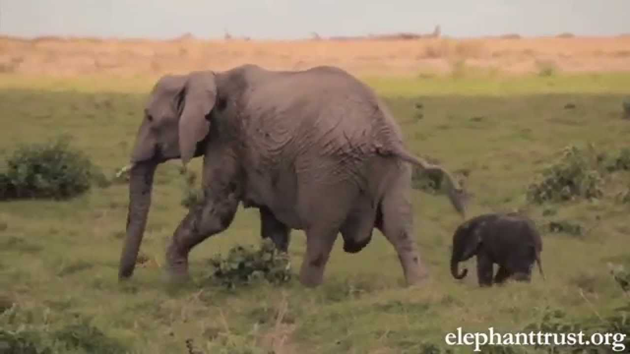 Elephant Baby-Mother love will make U cry. Being a mother ...