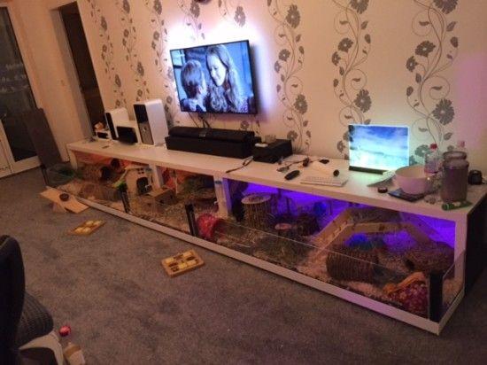 Une grande cage cochon d inde avec 5 tables lack rabbit cages and box tur - Construire table basse ...