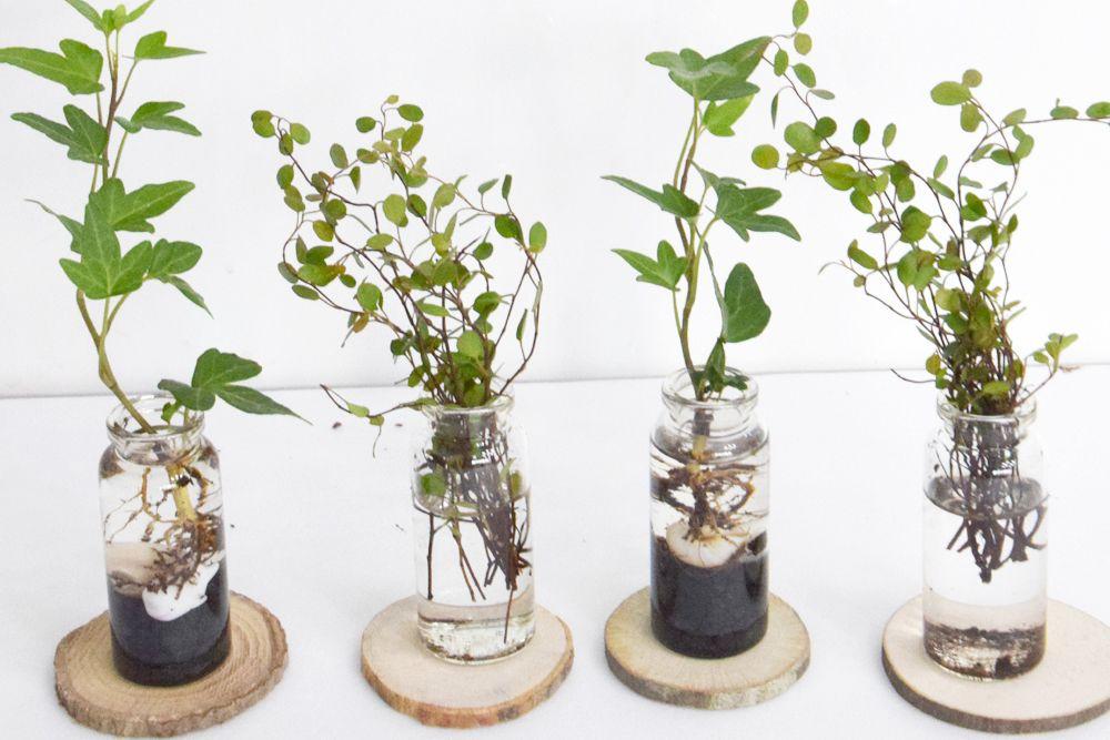 귀여운 수경재배식물 수경식물드ㄹ Pinterest 정원 식물 화분 식물 및 식물