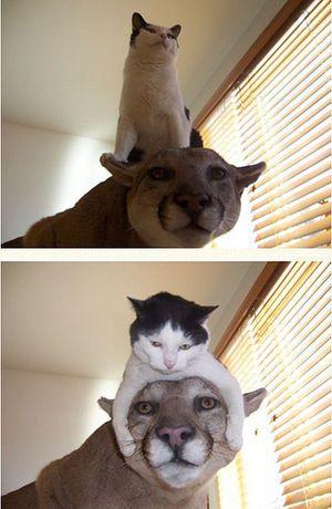 癒やしと笑いが止まらない 動物たちのおもしろい写真ネタ20選 ペット日和 ペット 子猫 動物