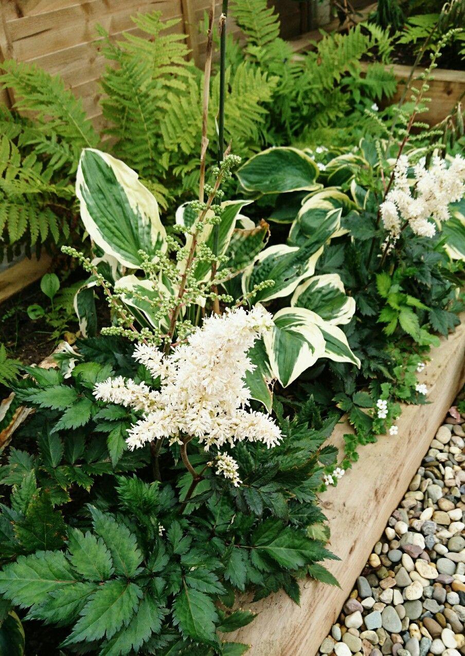 Companion Plants Astilbe Hostas And Ferns Backyard Landscape