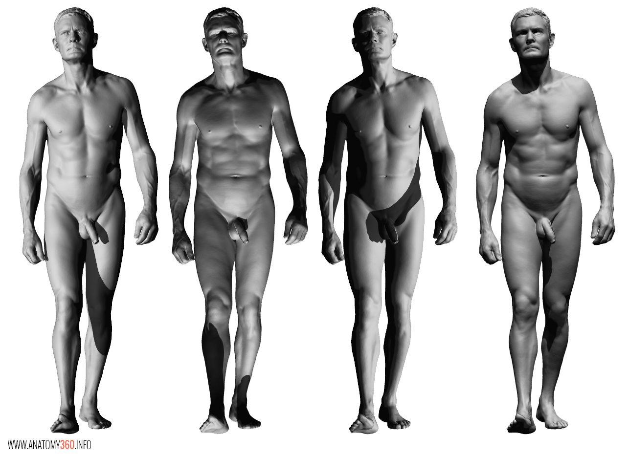 male body anatomy