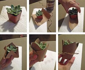 DIY succulent favor - mini succulent party favor but with navy paper and gold twine