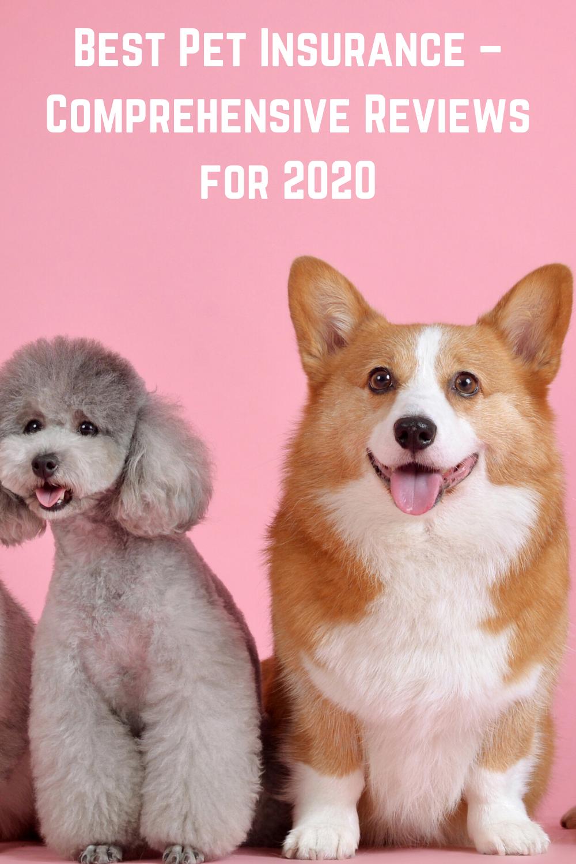 6 Best Pet Insurance Companies for August 2020 LendEDU