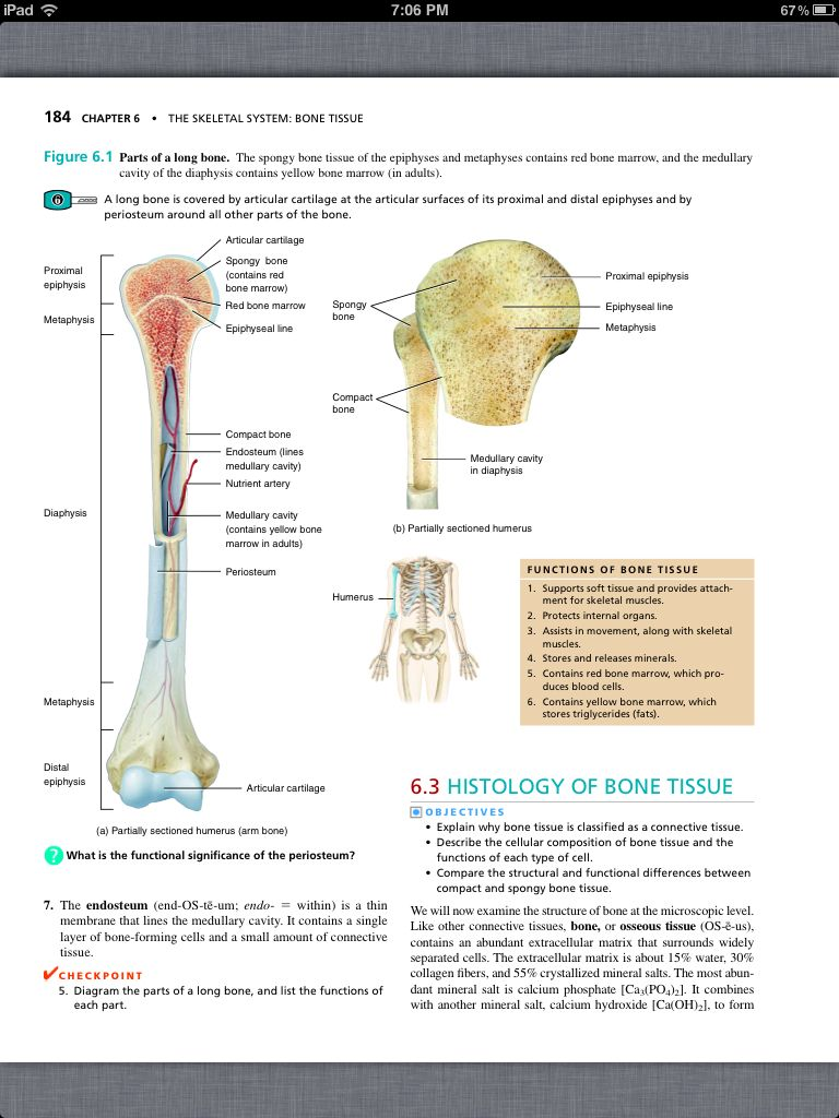 Principles of Anatomy and Physiology, Chapter 6, The Skeletal System ...