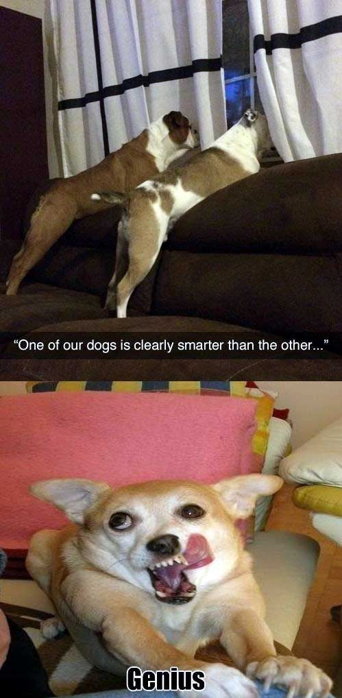 Smart Dog With Images Dumb Dogs Funny Dog Captions