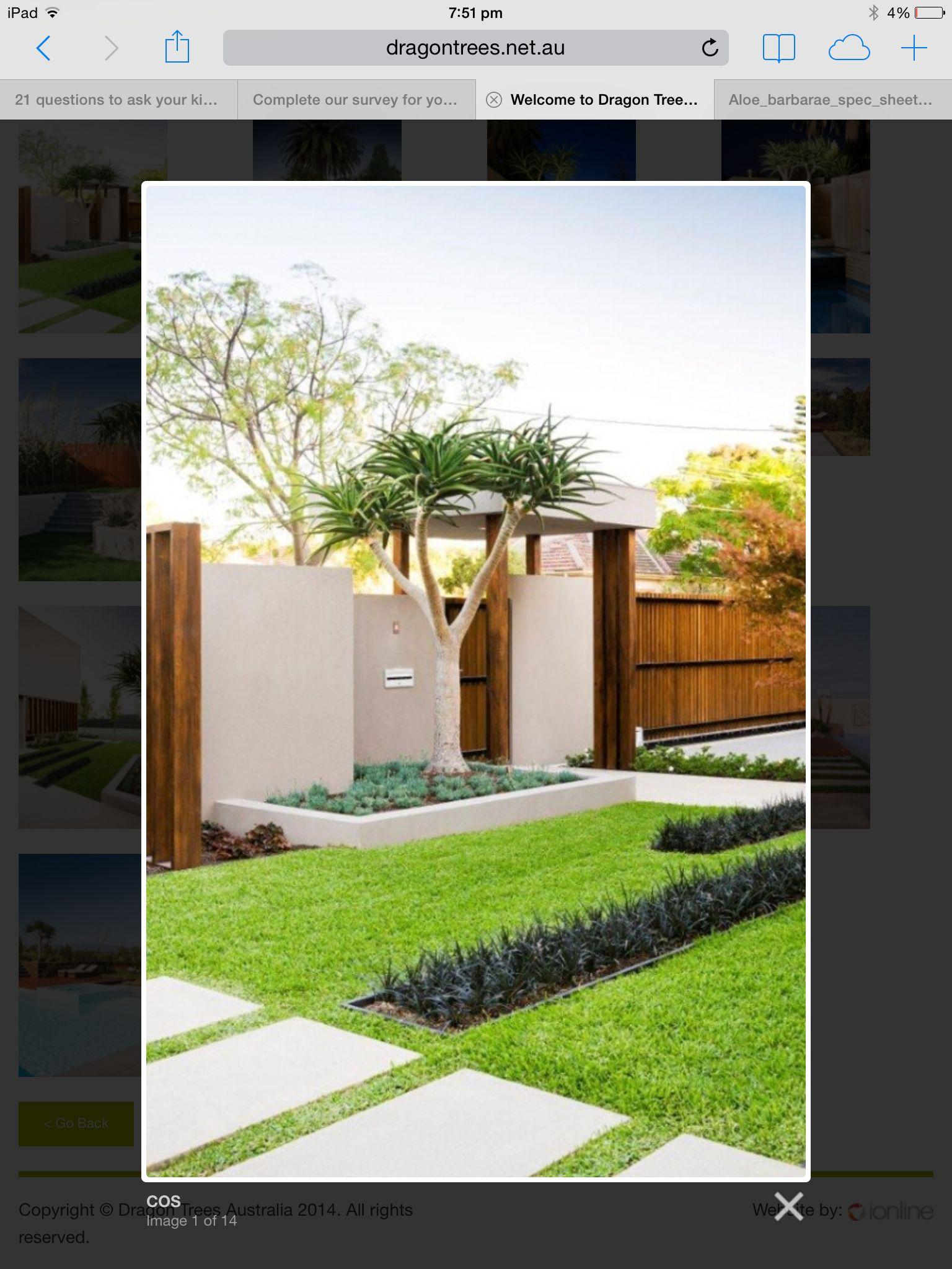 Aleo tree t u i n pinterest coastal gardens plants and gardens
