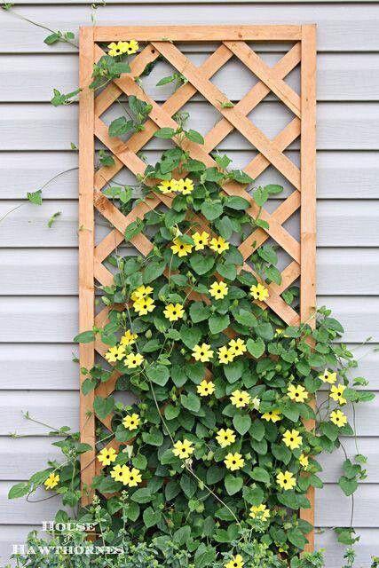 Porch Trellis Vine Plant Planting Flowers Flowering Plants Potted