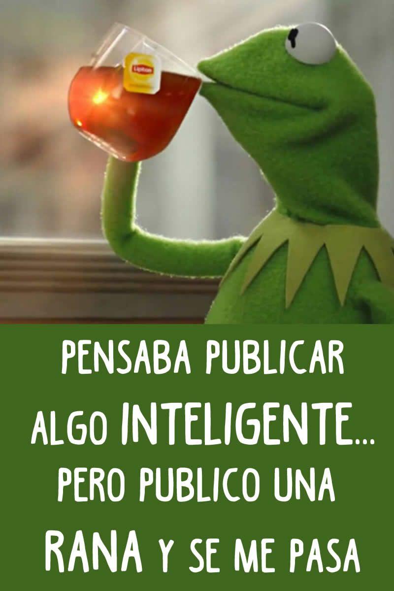 fotos divertidas de la rana gustavo  humor  Pinterest  Frogs