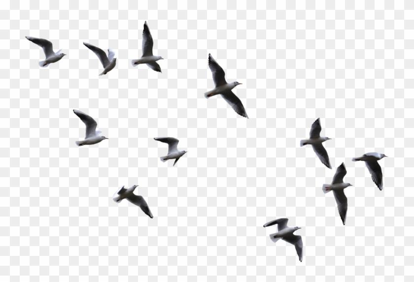 Flying Birds Png 884915 Flying Bird Silhouette Black Bird Fly Flying Bird Drawing