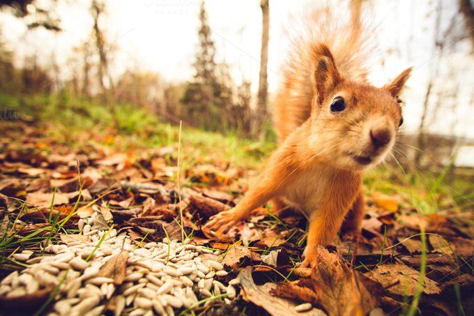Funny Squirrel animal in forest  by e v e r s t on @creativemarket