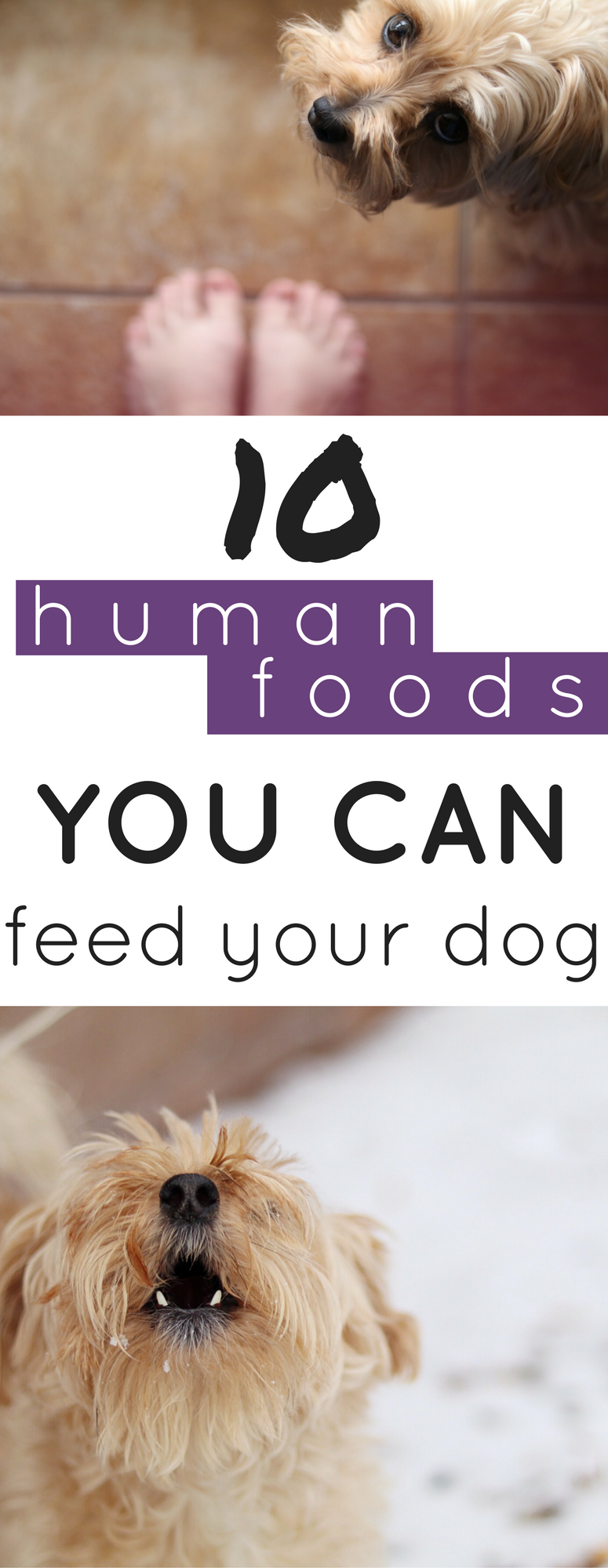 Can My Dog Eat That 10 Healthy Foods For Your Dog Best Puppy Food Puppy Food Best Puppies