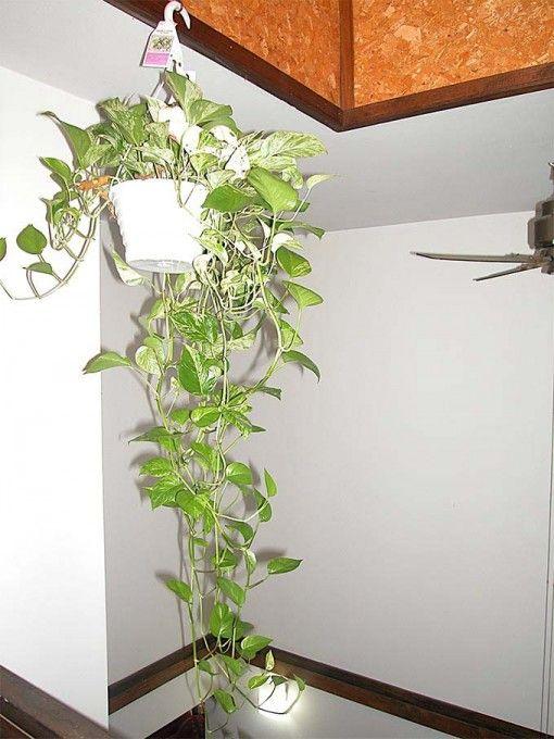 Indoor Money Plant Interior Plants Designs Ideas Indoor Plants