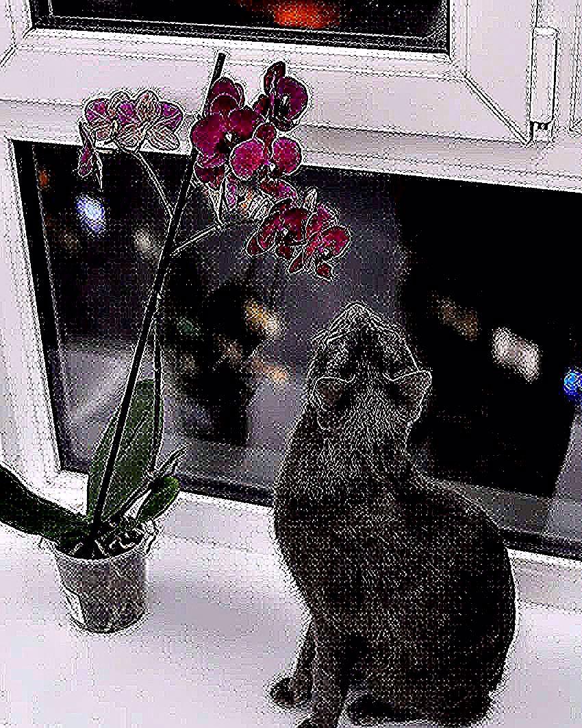 Когда ёлка надоела, Мишура, хлопушки... Буду нюхать орхидеи Лежа на подушке)  #скороновыйгод #котя#котэ #домашнийлюбимец#kitties  #flowers#catlover#fotocat#орхидея#kittycat