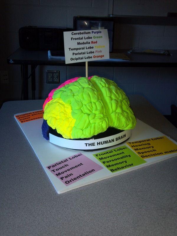 Brain Model Project Com Imagens Como Fazer Uma Maquete Feira
