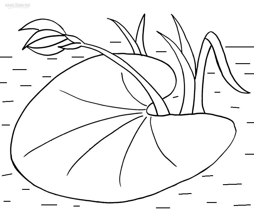 Lily Pad Coloring Pages Lily Pad Drawing Lily Pads Water Lily