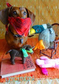 hardeharharr Dachshund, Animals, Dogs
