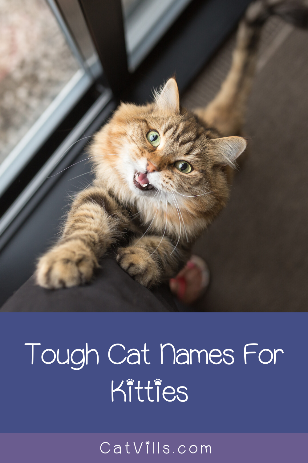 100 Totally Badass Cat Names for Tough Kitties in 2020