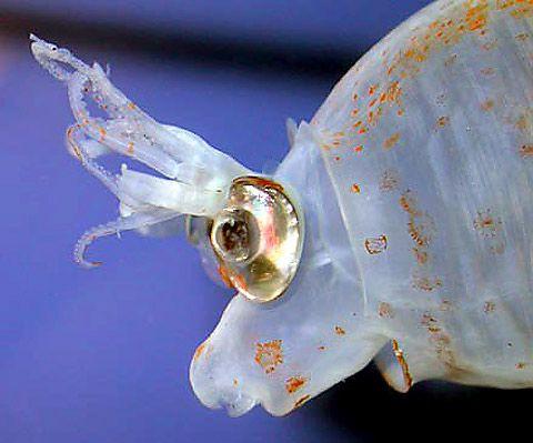 22+ Squid face ideas in 2021