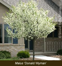 Small Flowering Trees For Landscaping One Of The Most Widely Used