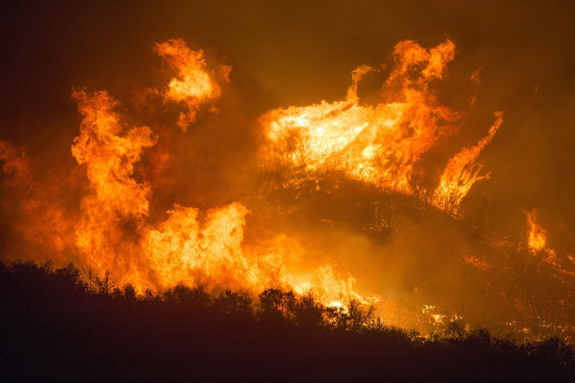What Are The Different Causes Of Forest Fire Information