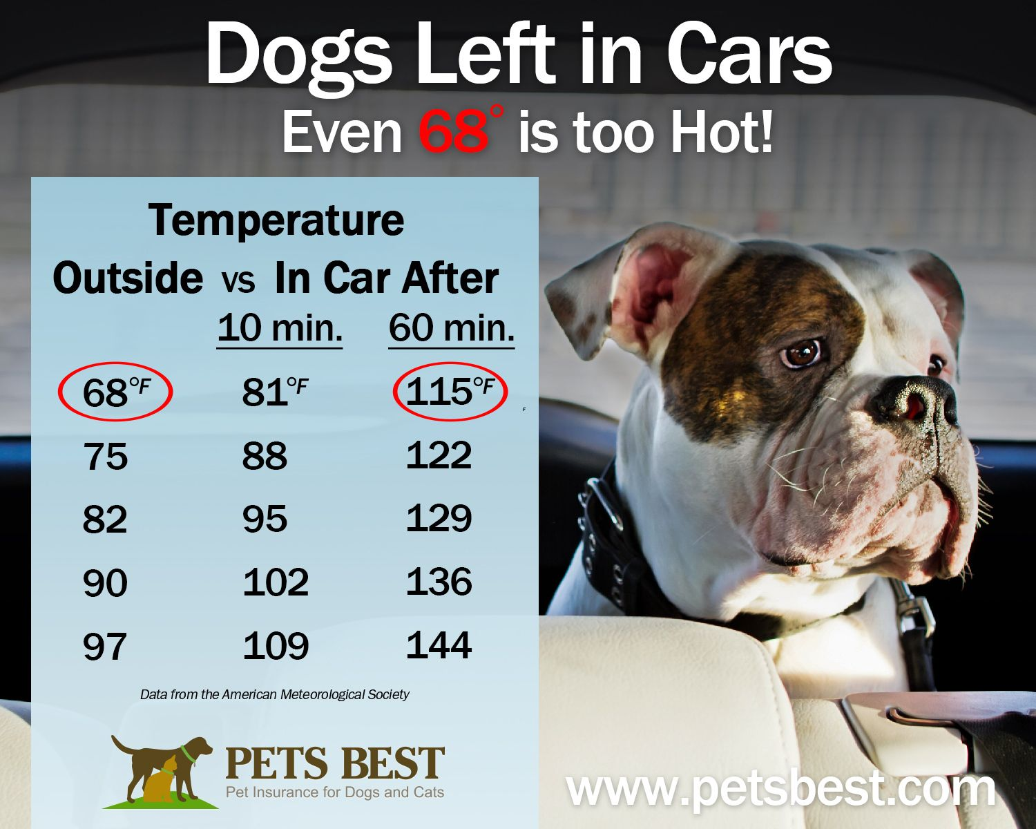 Dogs Left In Hot Cars Dogs Pet Insurance For Dogs Cool Pets