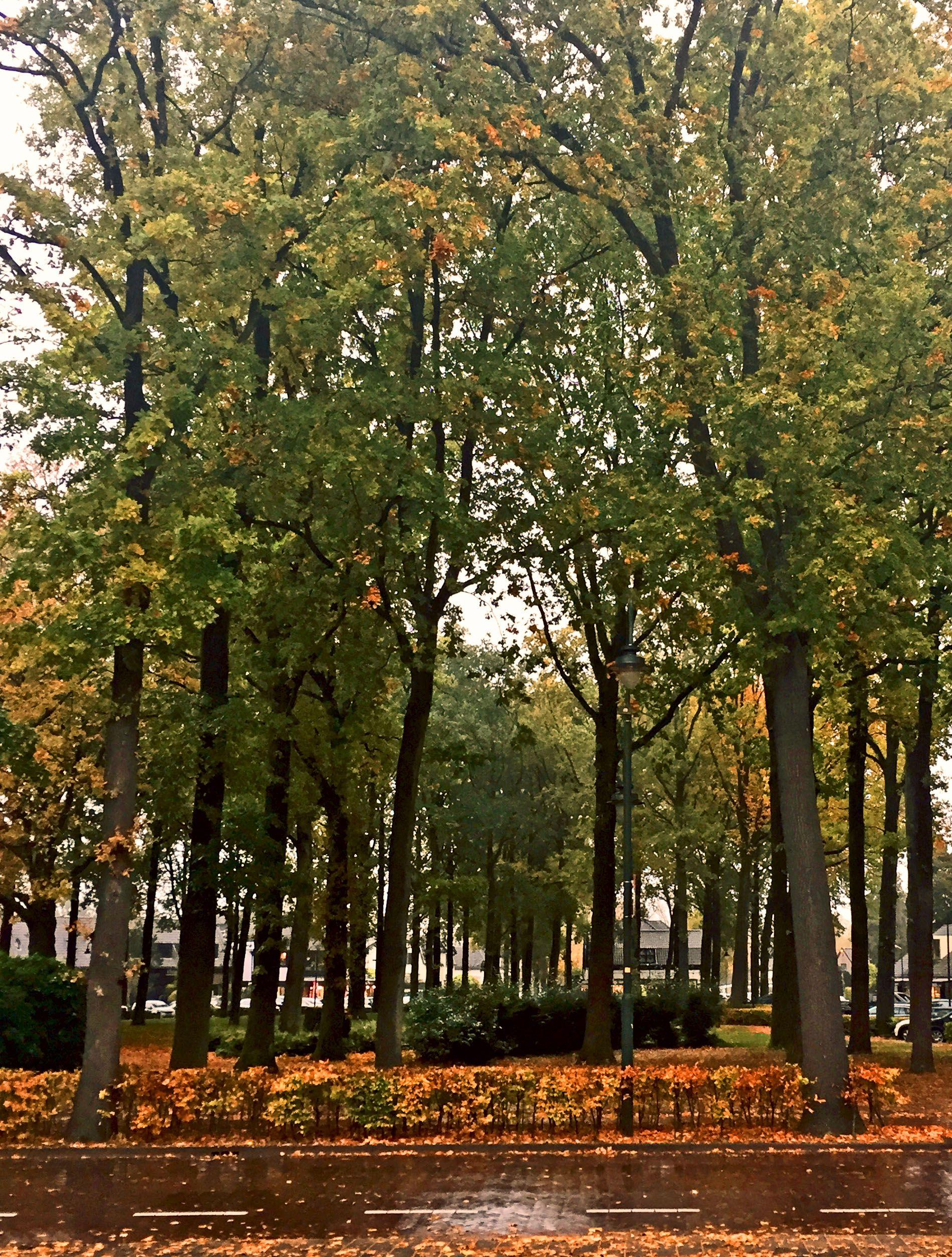 Even rainy autumn days can be beautiful.  #matsenmerthe #rain #Laren # autumn