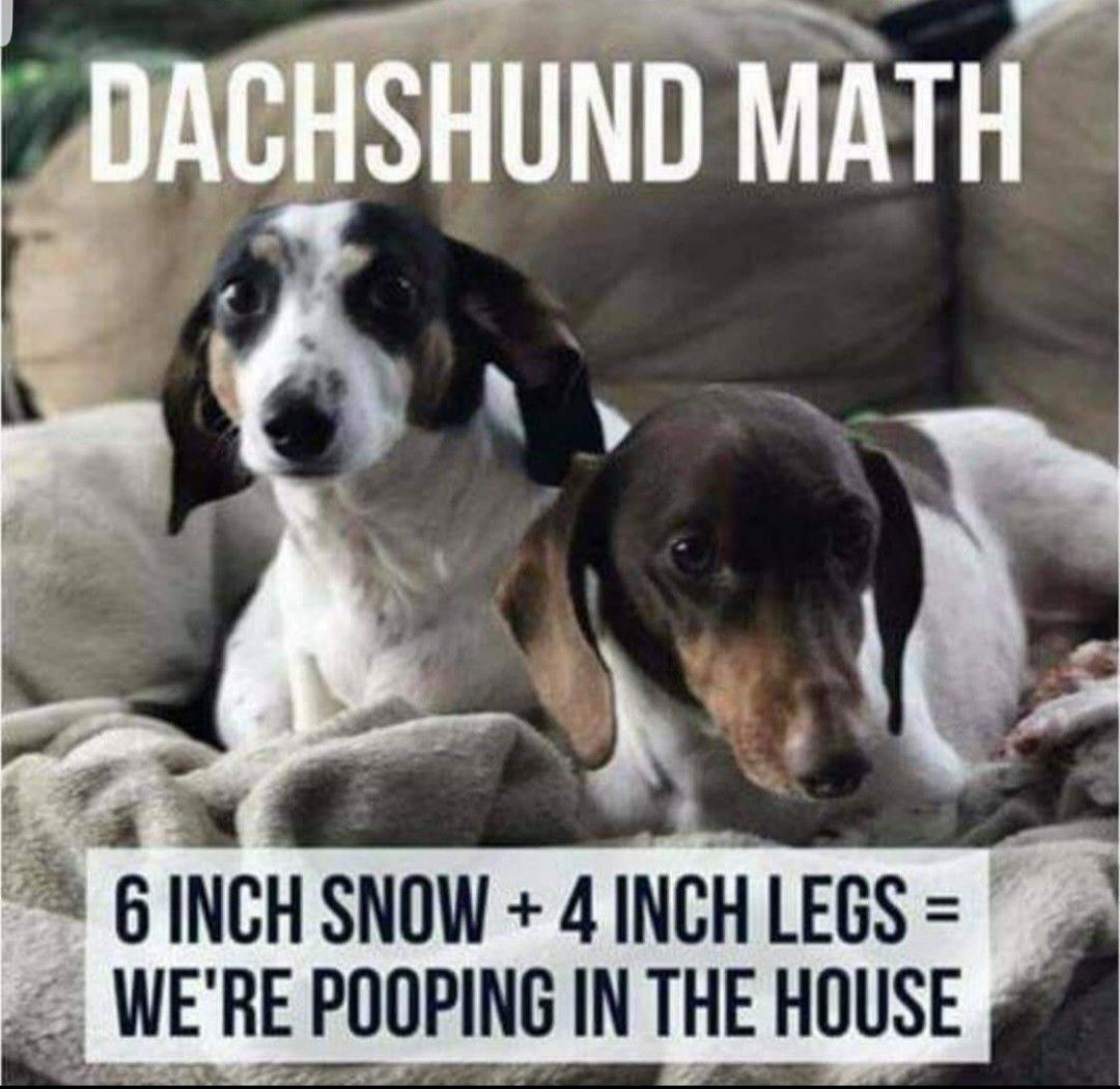 Pin By Korinne Paulsen On Dogs Funny Dachshund
