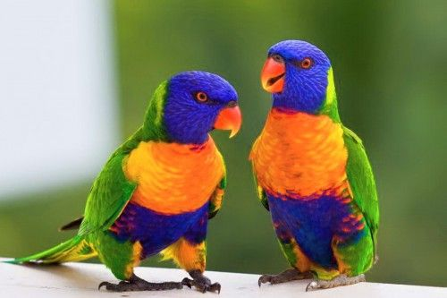 Top 10 Most Beautiful Birds In The World Biggone Most