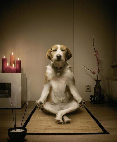 FUTURE THERAPHY:  SHARE THE DOGS' ZEN   Fremtiden byder i forlængelse af High Touch-tendenserne også på moderne menneskers brug og benyttelse af kæledyr, som fx hunde, som TERAPEUTISK, FEELGOOD, UBETINGET KÆRLIGHED og NÆRVÆR. Dette vil give livsglæde og nærvær til singler, travle arbejdsmennesker, unge eller familier der ikke kan forpligte sig til at købe en hund og/eller ENSOMME.  Share the pets! Share the love!  Hundecaféer, rent-a-dog-for-a-reallife-walk etc er en del af fremtidens…