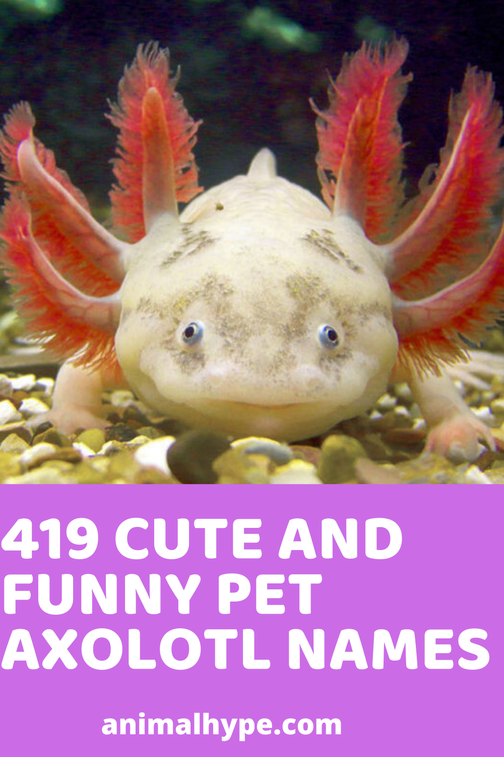 419 Cute and Funny Axolotl Names in 2020 Pets, Funny animals