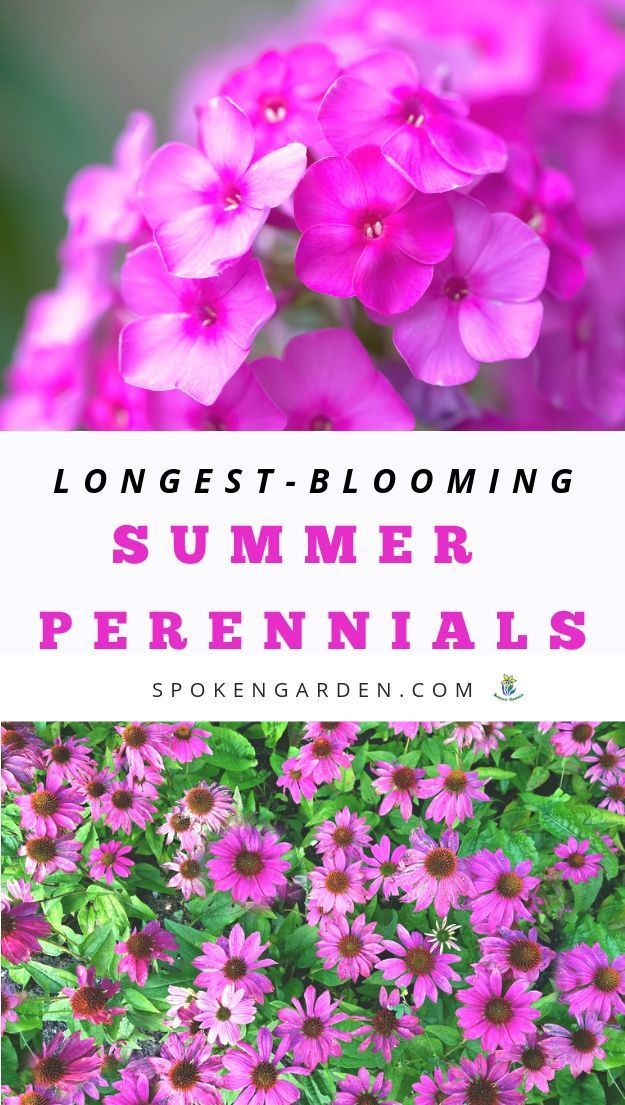 LongestBlooming Perennials For Your Summer Garden   DIY Garden Minute Ep  99 is part of Summer flowers garden, Spring garden flowers, Fall flowers garden, Long blooming perennials, Flowers perennials, Blooming plants - Learn about which plants you can add to your landscape that would make great crocosmia companion plants  Crocosmia is a striking addition to yo