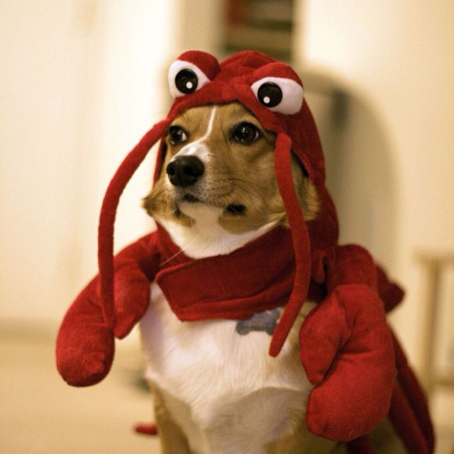 Okay, maybe this isn't the missing species Beaglobster, but it's pretty dang precious in our eyes!