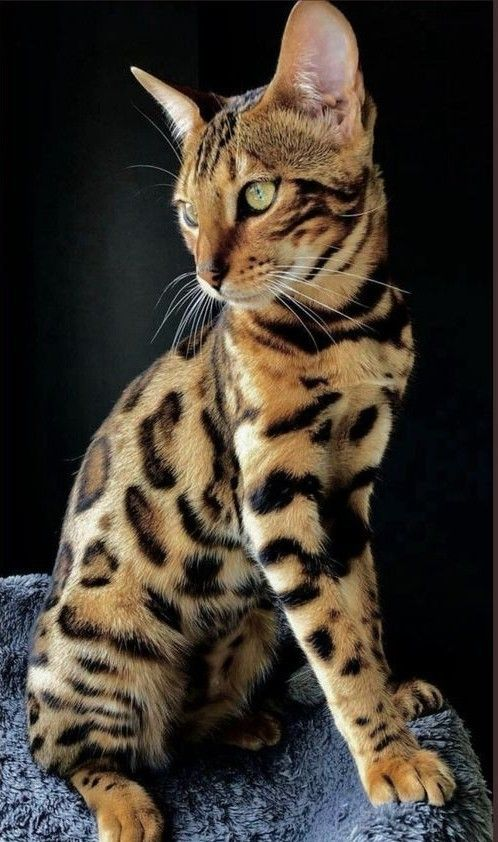 Pin by Amber on Animals in 2020 cats, Pretty