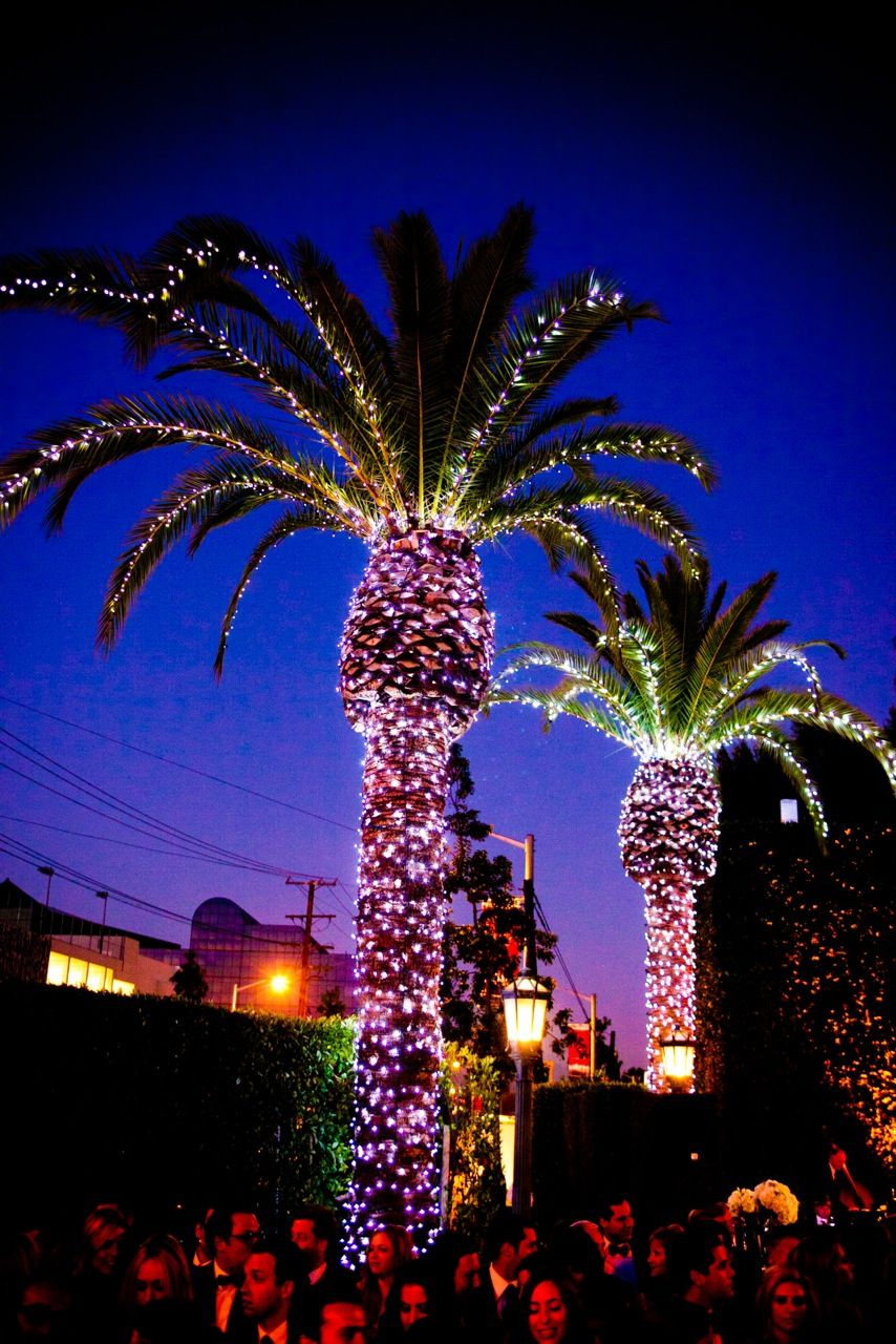 palm trees light up the night at cecconi s west hollywood west