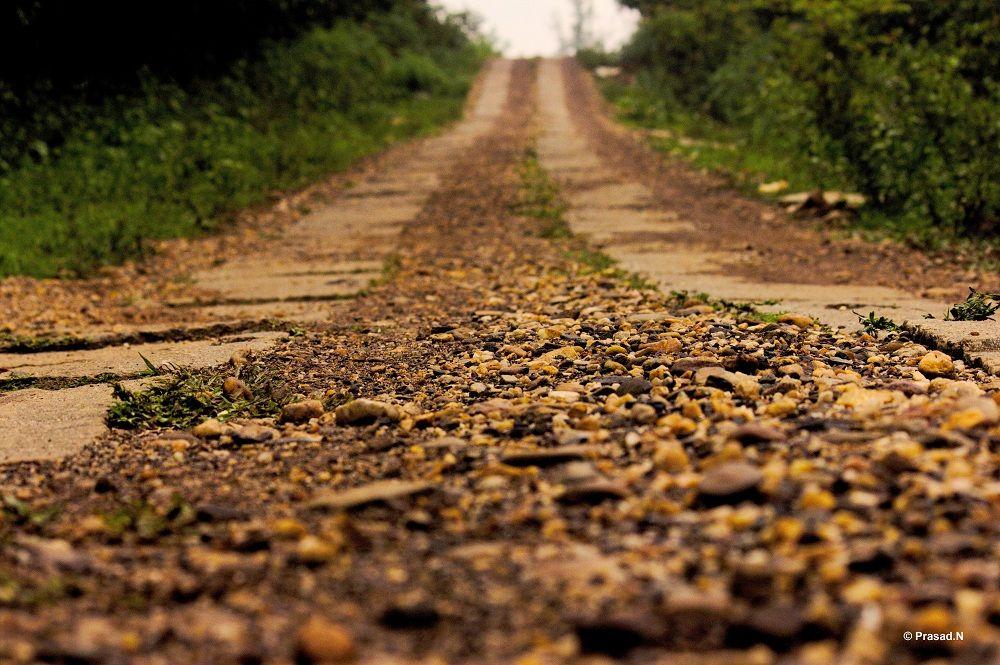 Eco Volunteering Program Bhagavathi Nature Camp Kudremukh Nature Camping Escape Plan Country Roads