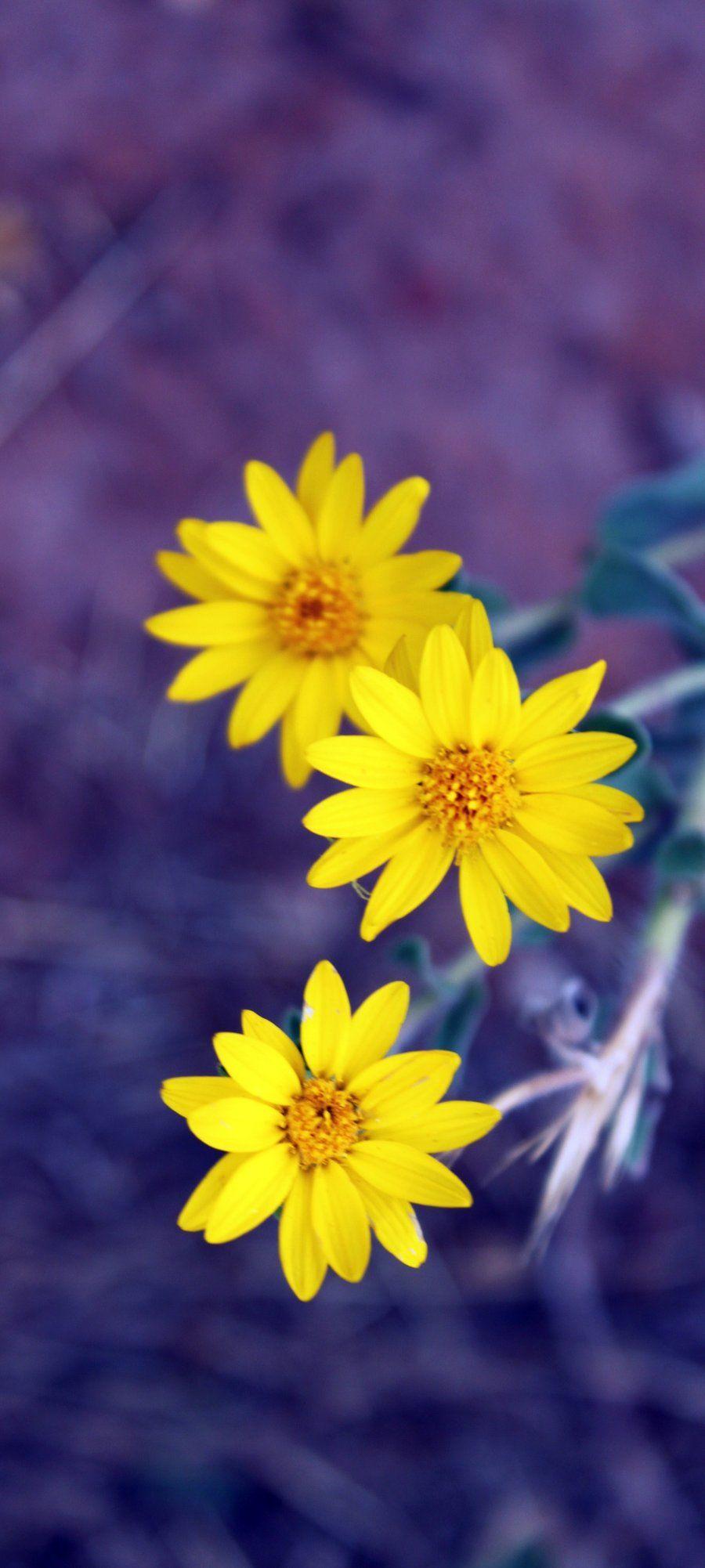 O Paraíso do Amor é tudo flor! Dani Cabo