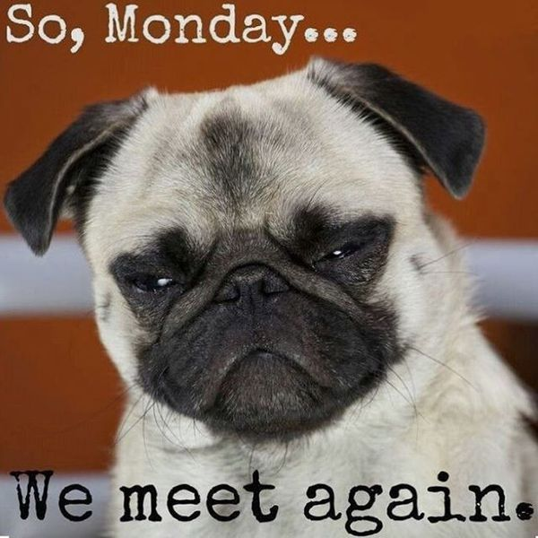 Monday Memes - Laugh, Cry and Post These Funny Monday ...