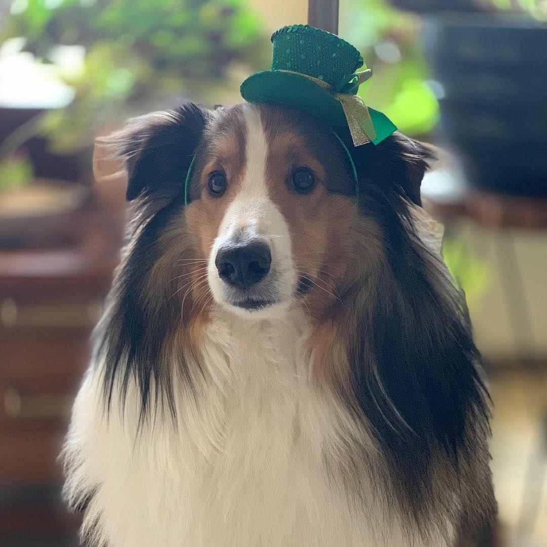 Everybodys irish on st patricks day patrick irish