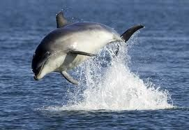 Dolphin in mid air. Made me smile :)