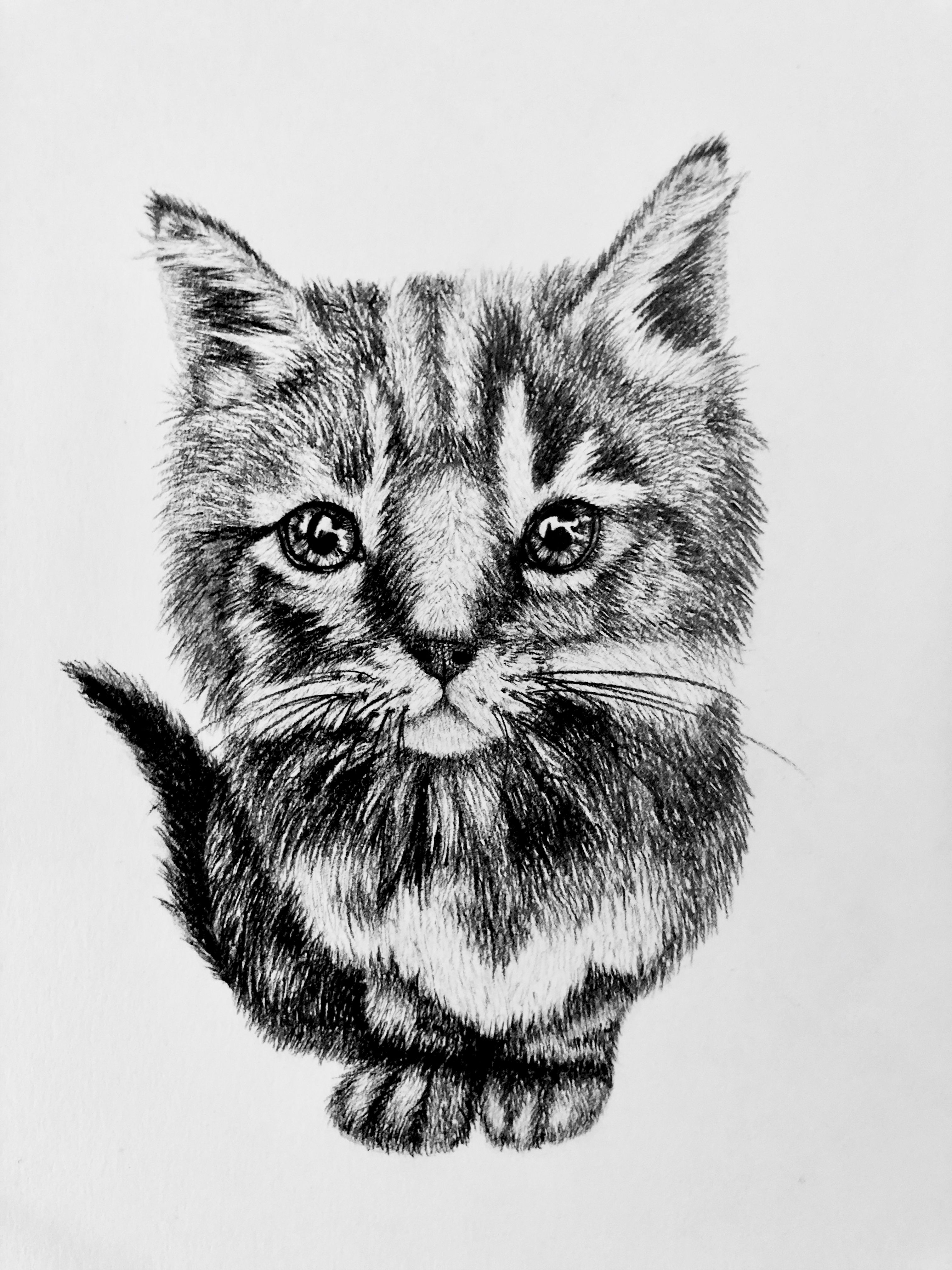 Cute Kitten Sketch For Sale In 2020 Kitten Art Cat Art Trippy Drawings