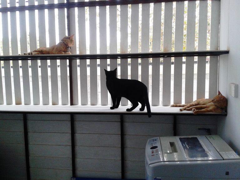 ร ว วร วก นแมวและบ านแมวอย างง าย ห องแมว