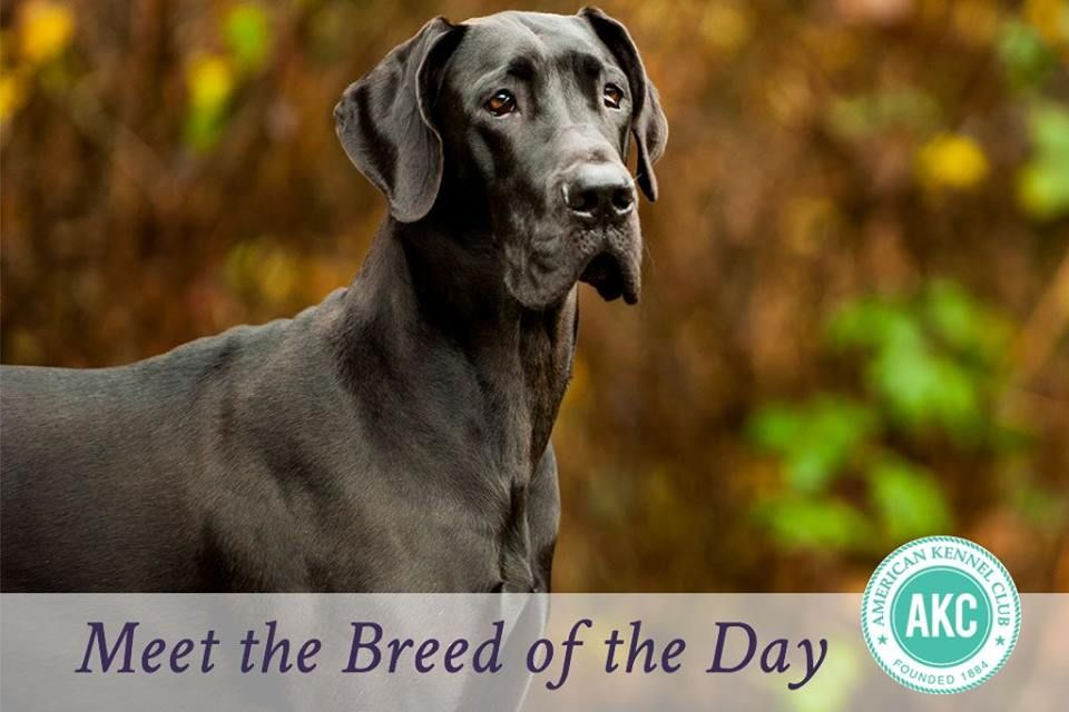 Today S Breed Of The Day Is The Friendly Patient And Dependable
