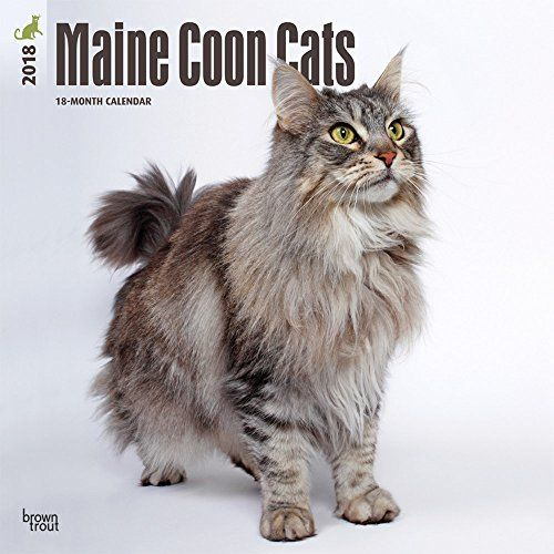Maine Coon Cats 2018 12 x 12 Inch Monthly Square Wall Calendar, Animals Cats Pet Feline
