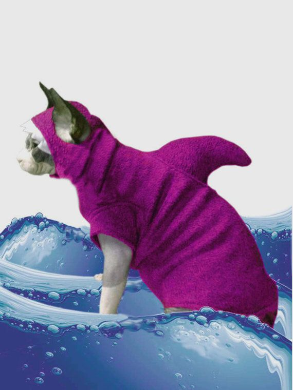 Kitten Shark Cat Sweater Only Hat sold separately. Shark Costume Shark Week Cat Costume Halloween Sphynx Clothes Dog Clothes Pet Costume by SimplySphynx