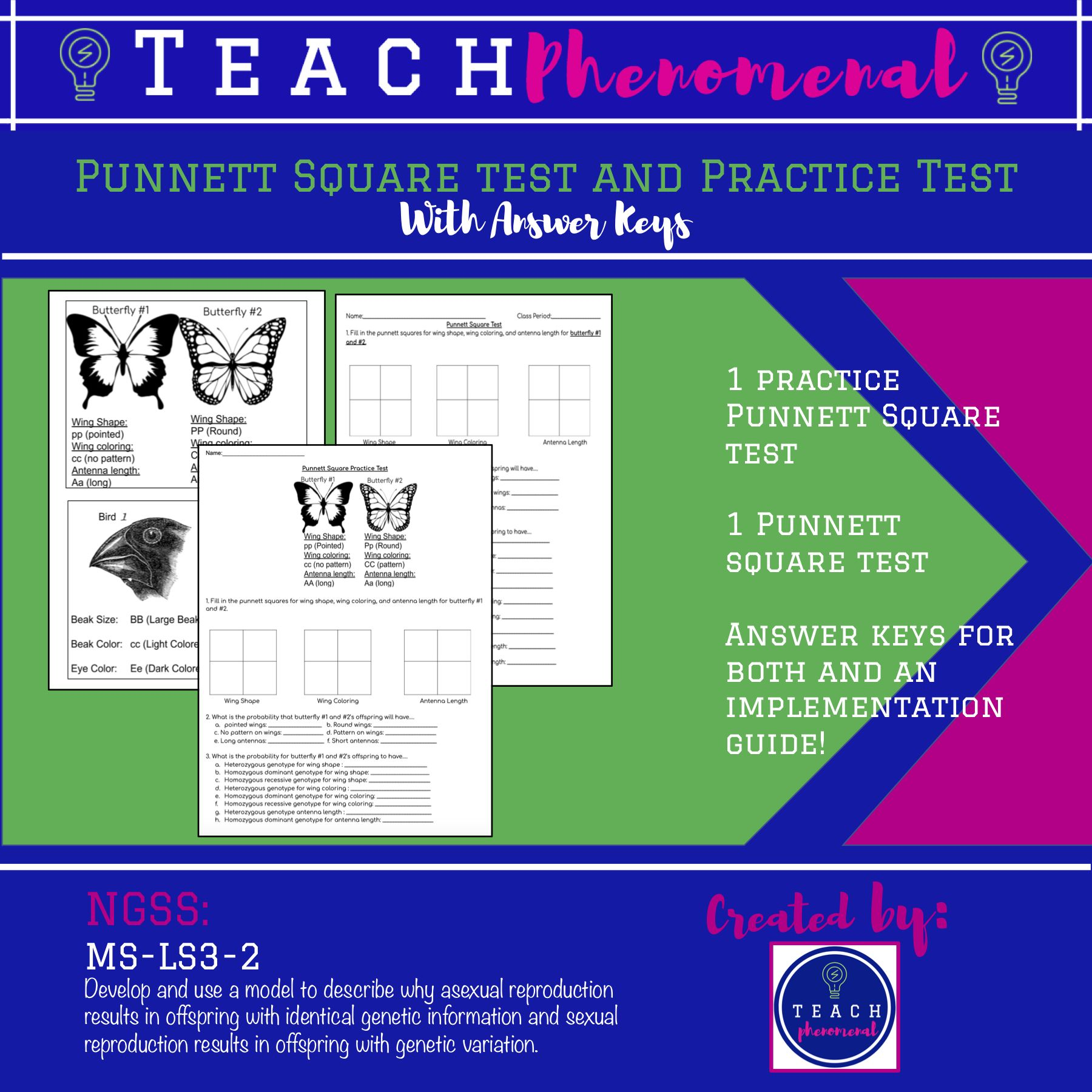 Punnett Square Test And Practice Test In